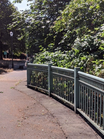 Before we started, this railing was completely covered over with the invasive berries.